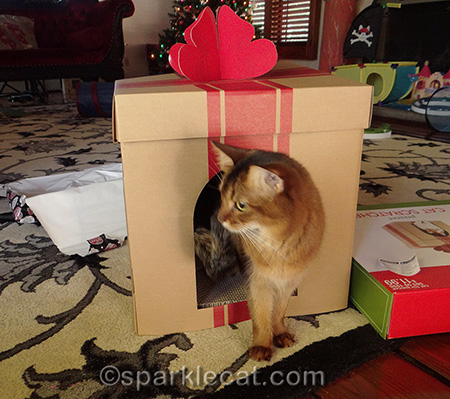 somali cat, gift box scratcher
