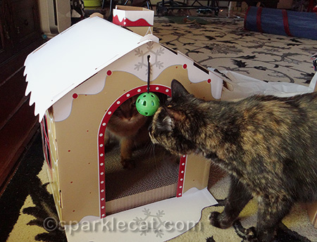 somali cat, tortoiseshell cat, gingerbread house scratcher
