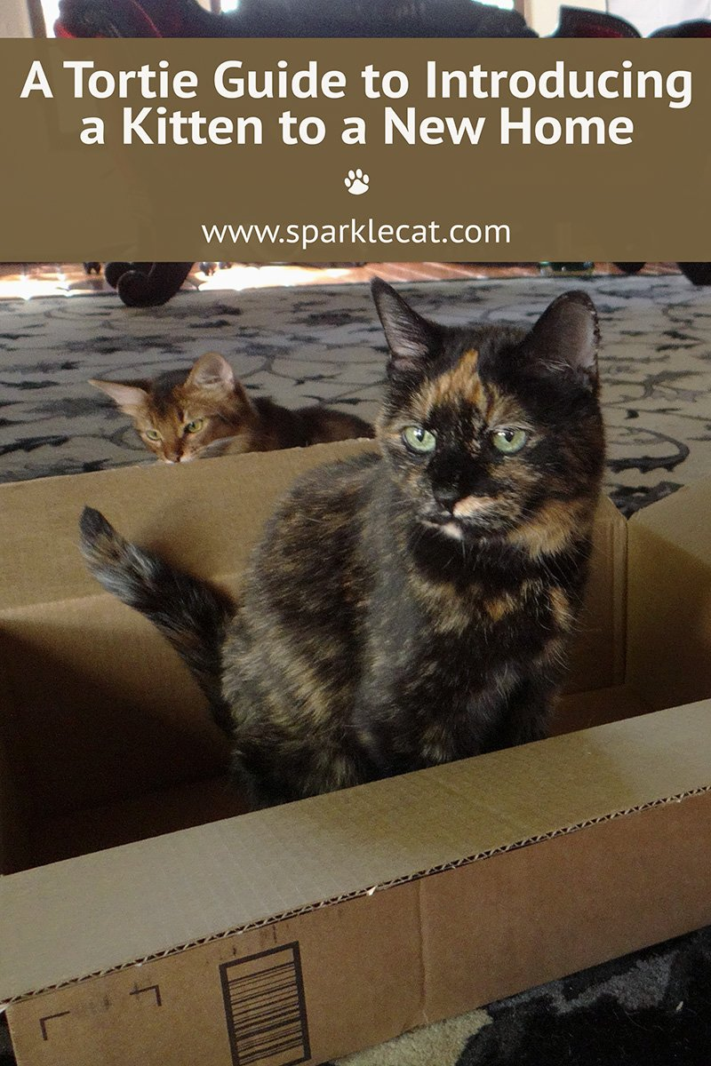 A Tortie Guide to Introducing a Kitten to a New Home