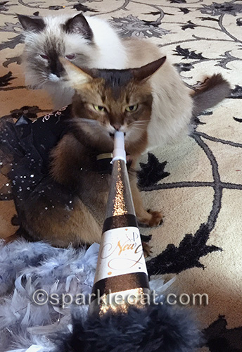 Somali cat, Ragdoll cat, New Year's Eve, party horn