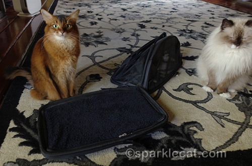 somali cat and ragdoll cat with sherpa comfort ride pet carrier