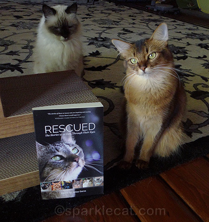 If you are a rescue kitty, you could be in the next volume!