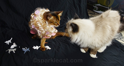somali cat in crazy cat lady outfit, and ragdoll cat