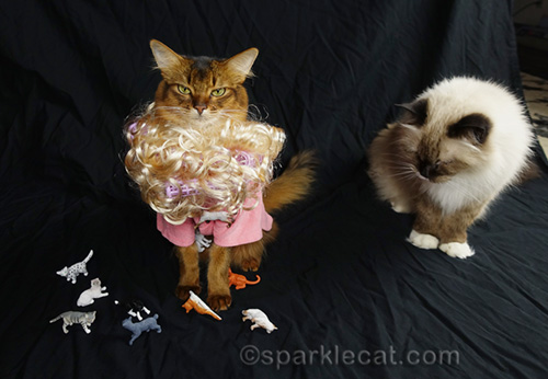somali cat in crazy cat lady outfit and ragdoll cat