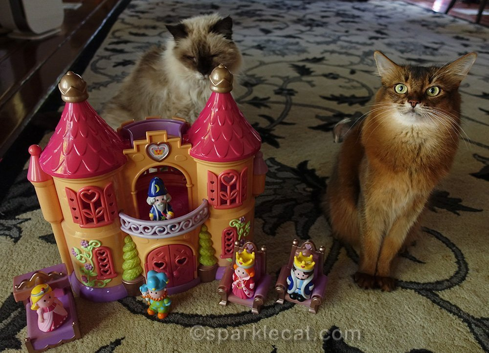 somali cat and ragdoll cat with kids' castle
