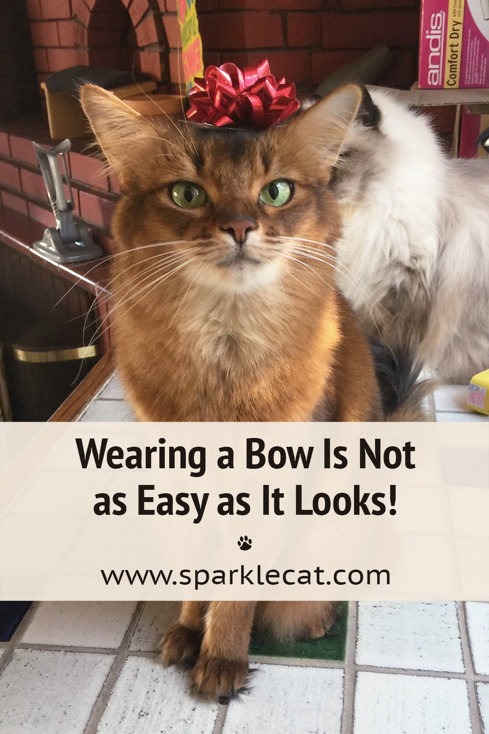 Wearing a Bow Is Not as Easy as It Looks!