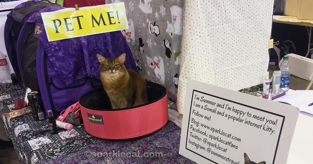 Pet Me Cat at cat show