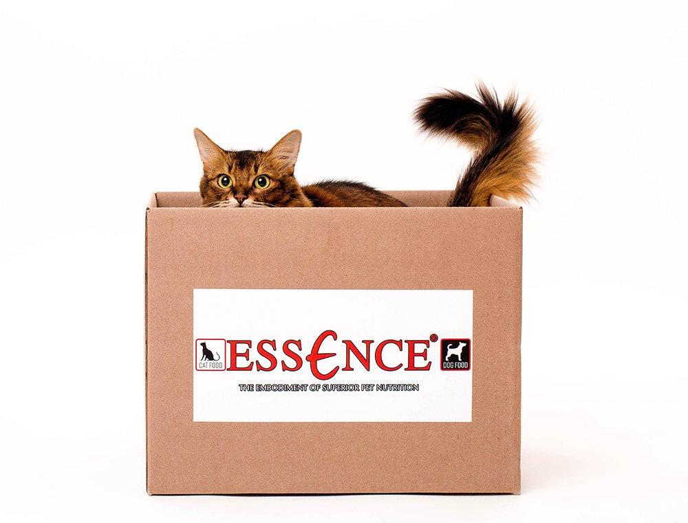 somali cat in Essence box