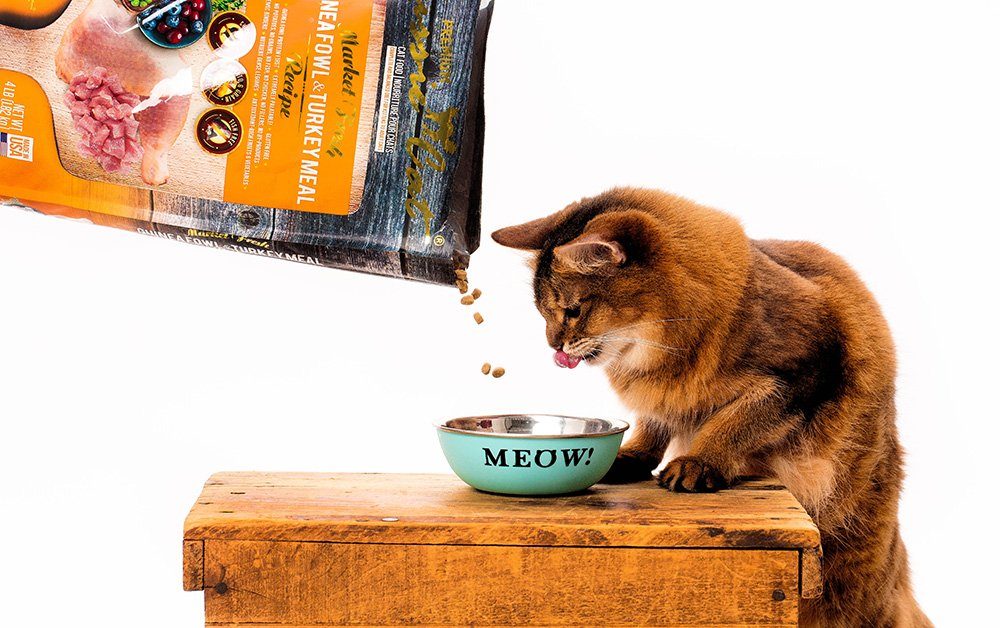 somali cat happy to be a food model