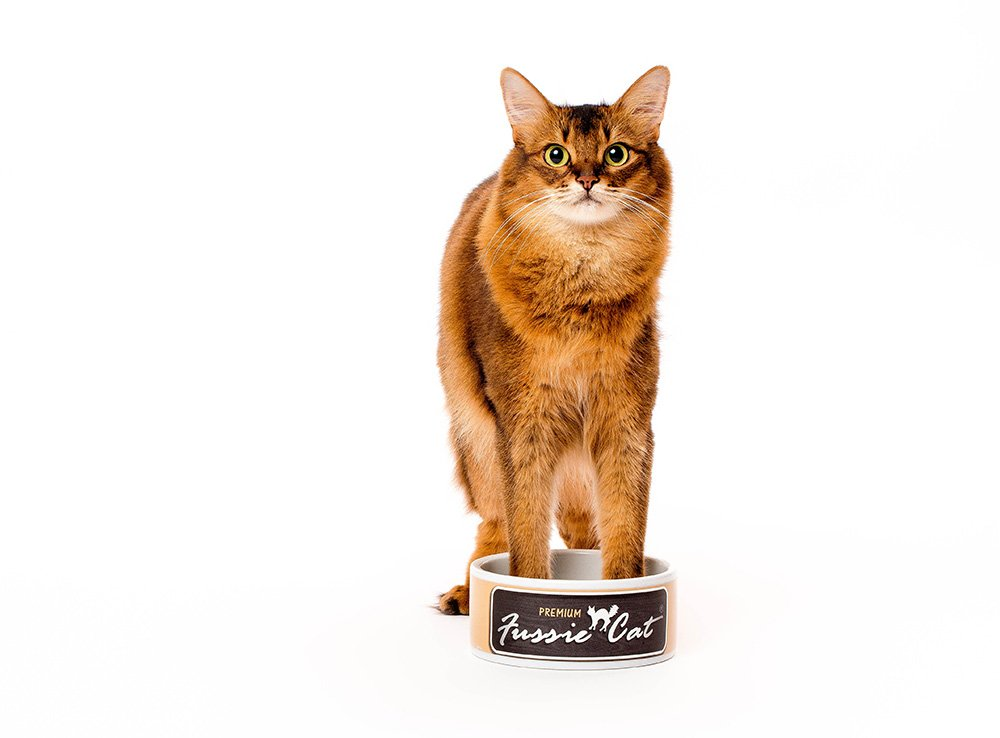 somali cat with front paws in food dish