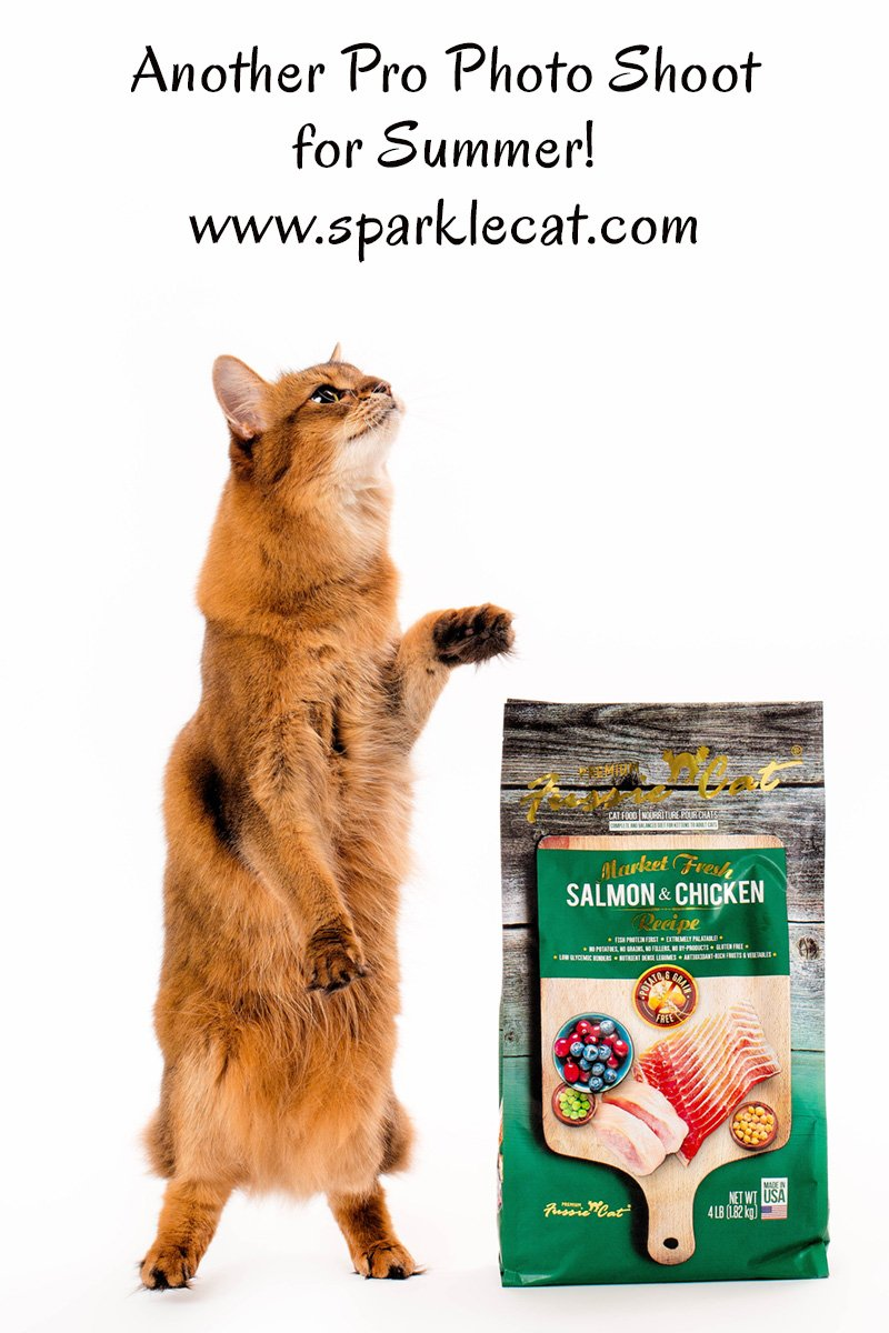Summer does a pro photo shoot for several Pets Global cat food brands.