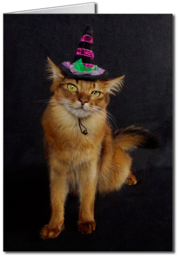Witchy Halloween Somali Cat Greeting Card, cat in witch hat