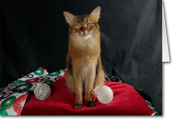 Holiday Somali Cat, featuring Summer Samba Card - new holiday cards