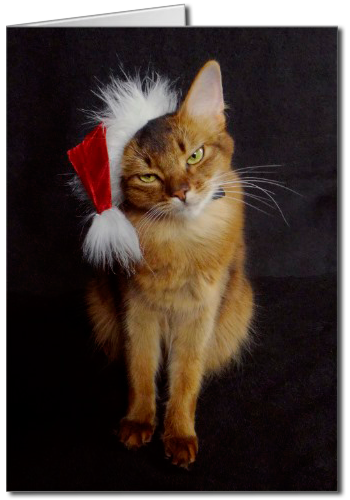 Grouchy Somali Cat in Santa Hat Christmas Greeting Card