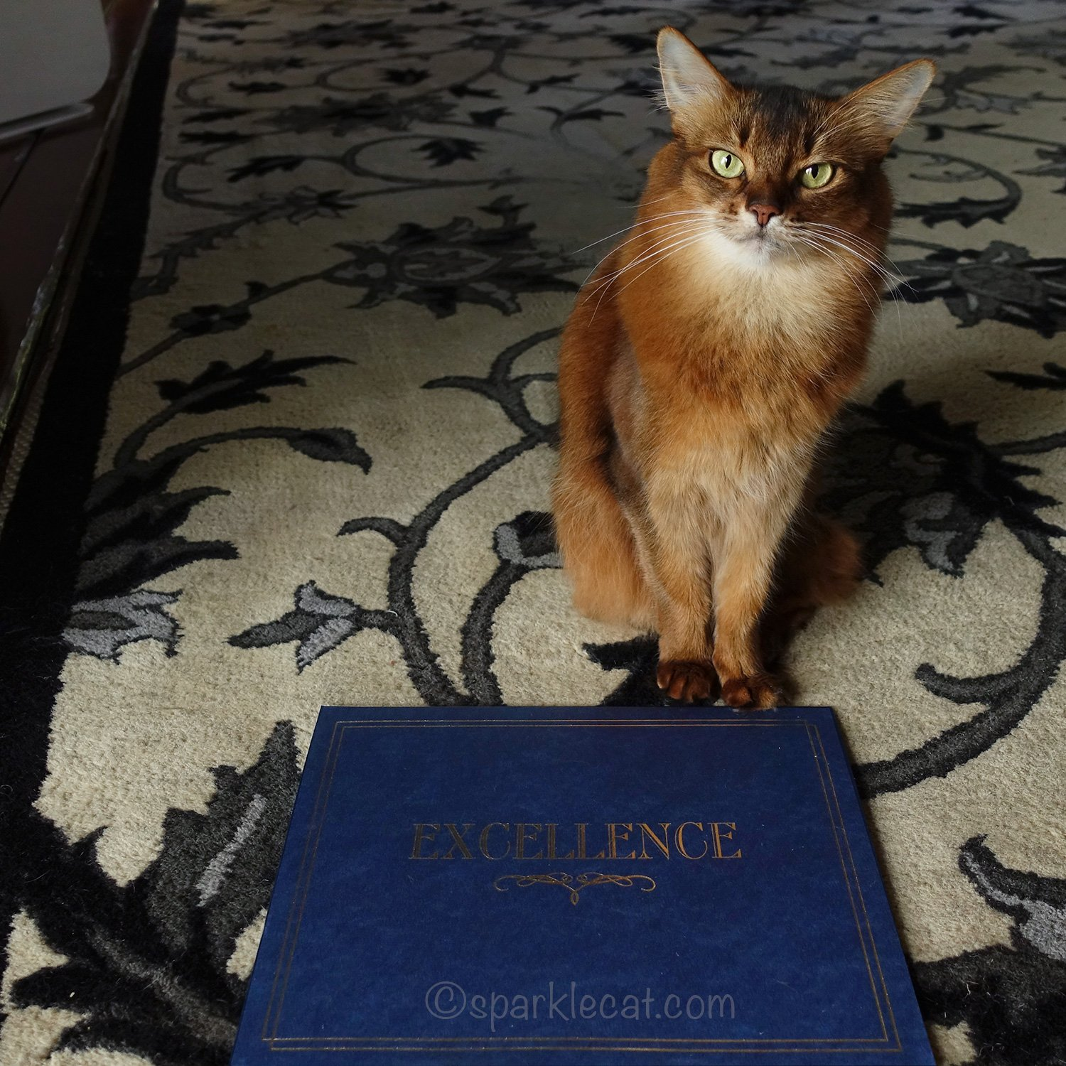 somali cat with Cat Writers Certificates of Excellence