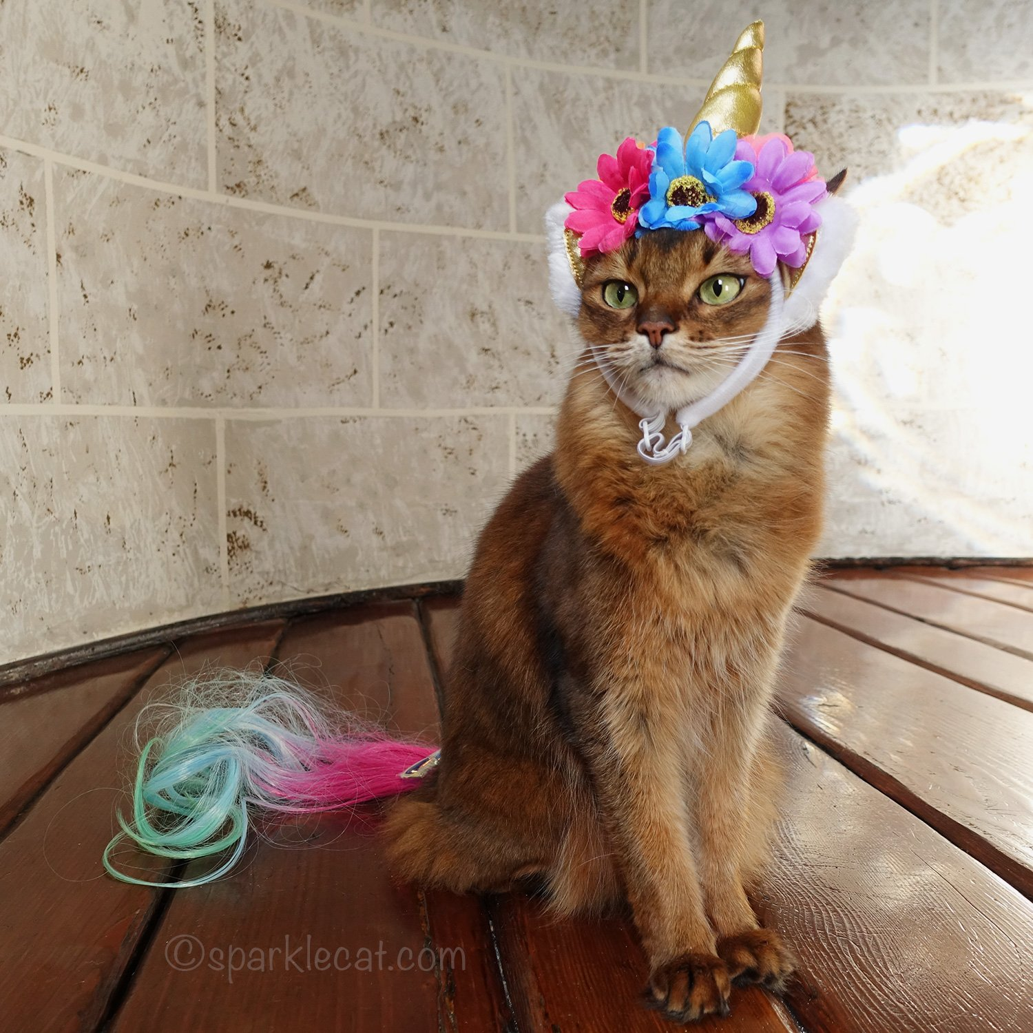 somali cat with unicorn horn and tail