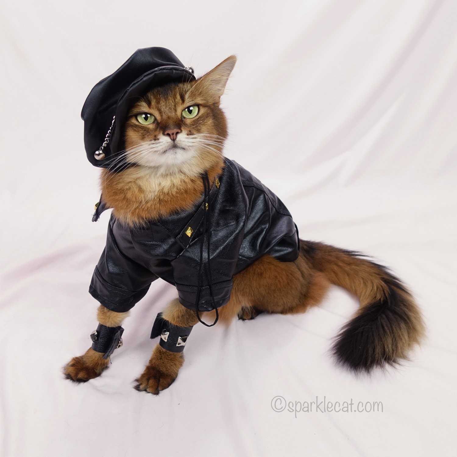 Somali cat posing in her black biker jacket, cuffs, and motorcycle hat
