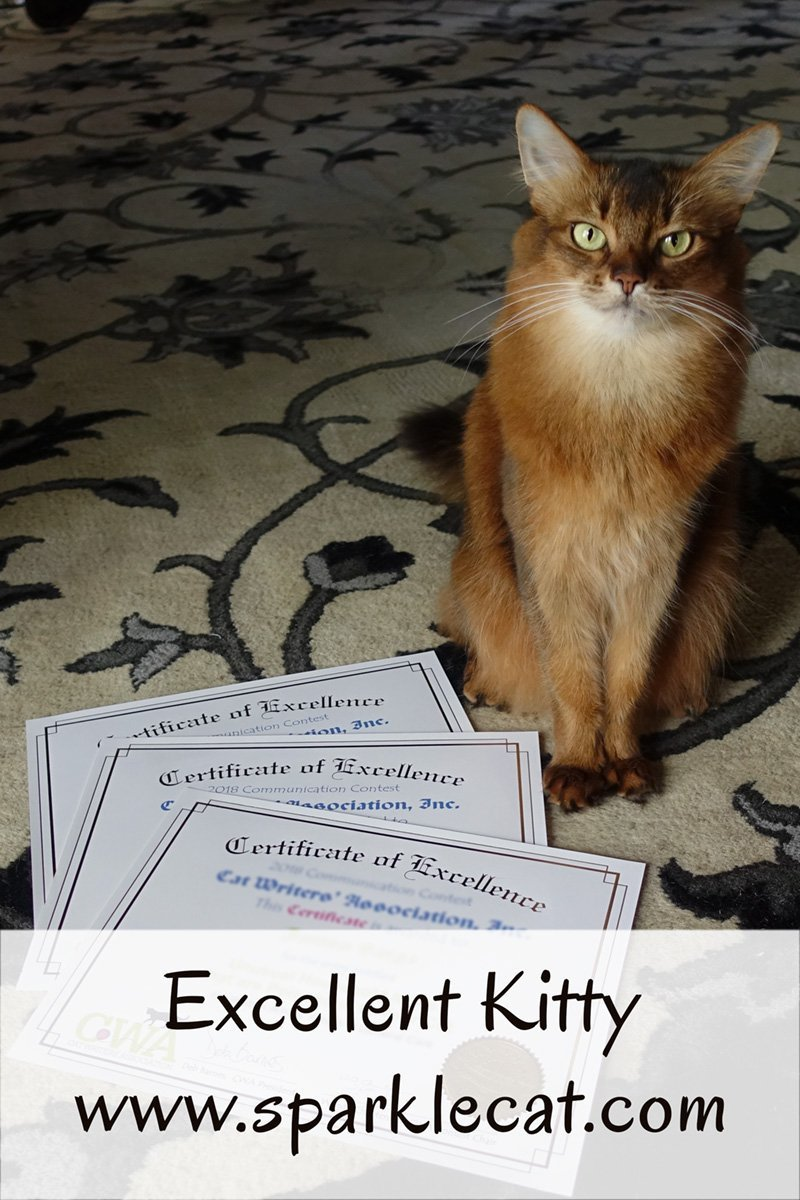 Summer is very proud of her 3 blog posts that won CWA Certificates of Excellence - here's why