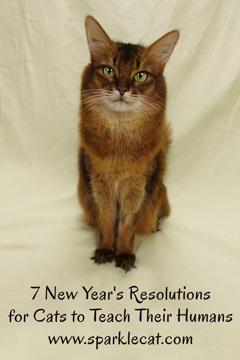 Summer has a list of 7 New Year\'s resolutions that cats can teach their humans.