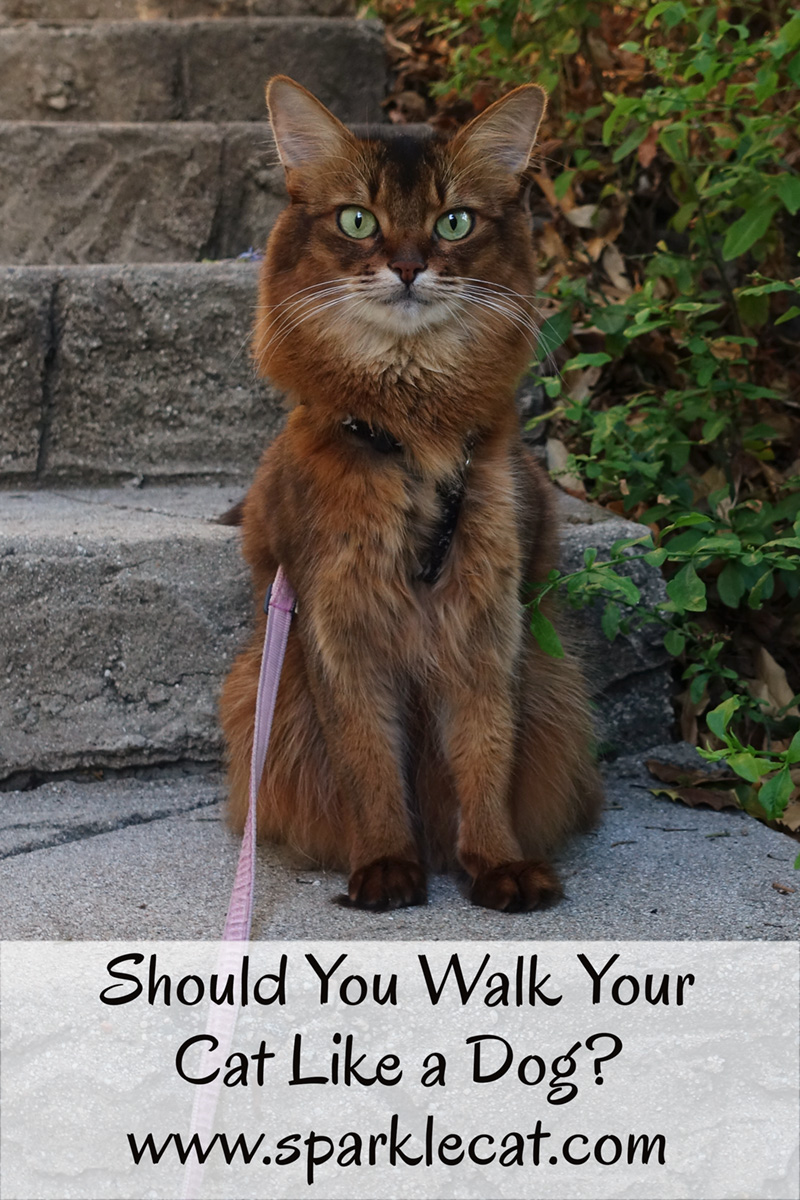 Should you walk your cat like a dog? Summer clarifies what this question really means.