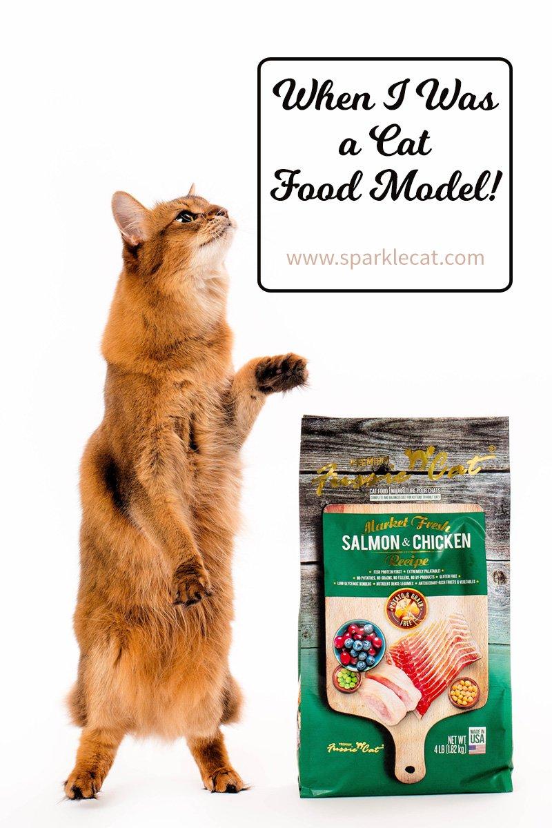 Food Model!