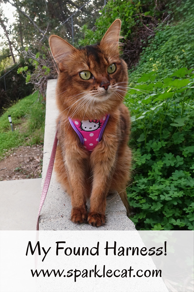 Summer's human finds a long-lost harness, and Summer wears it while she explores the backyard.