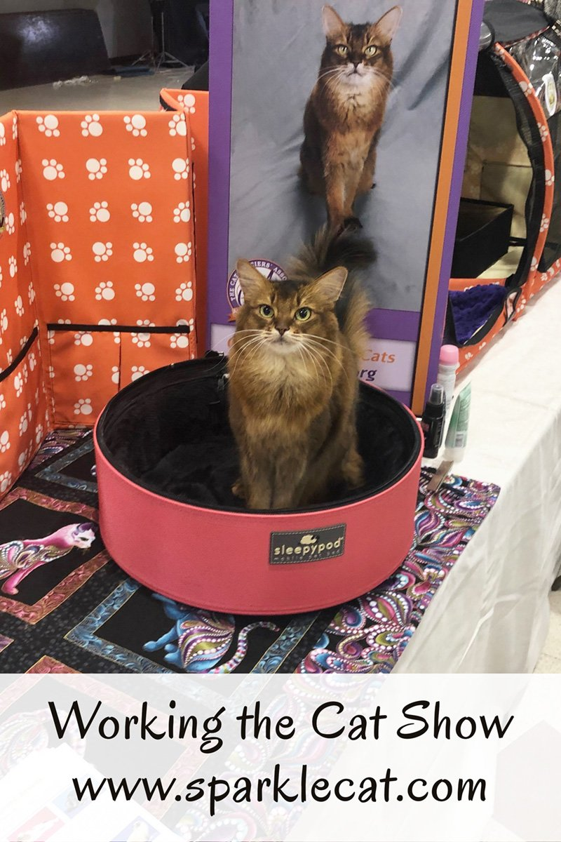 Summer is working the cat show, and she tells you all about it.