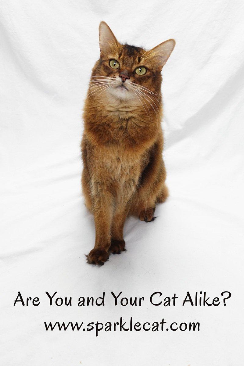 Êtes-vous et votre chat pareils? L'été a quelques problèmes avec une étude récente.