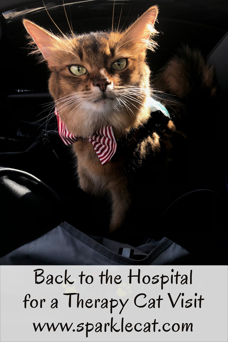 Summer returns to the hospital for a therapy cat visit after a long absence.