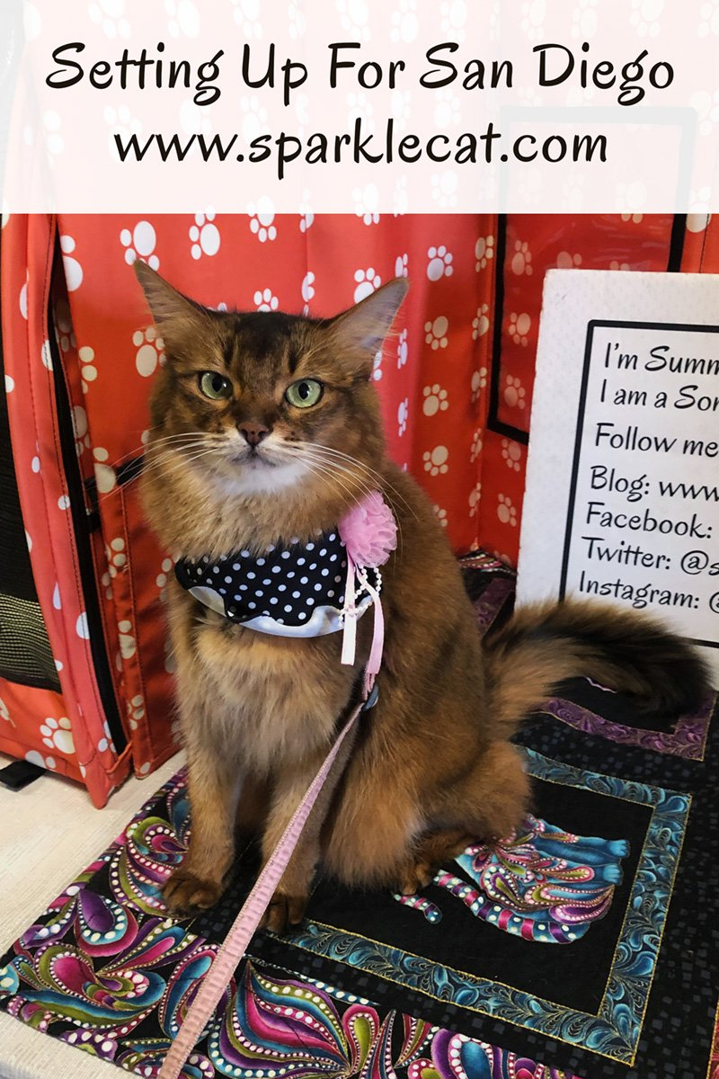 Summer and her human set up her benching area for the San Diego Cat Show.