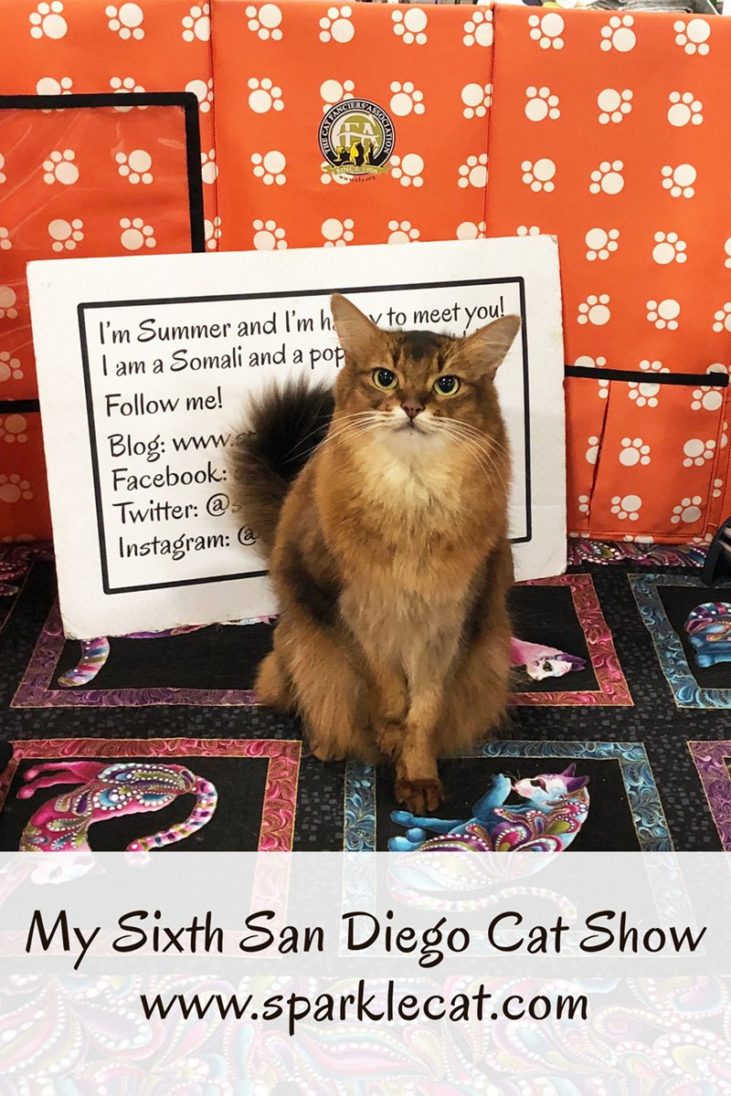 Summer is an Ambassador Cat at her sixth San Diego Cat Show.
