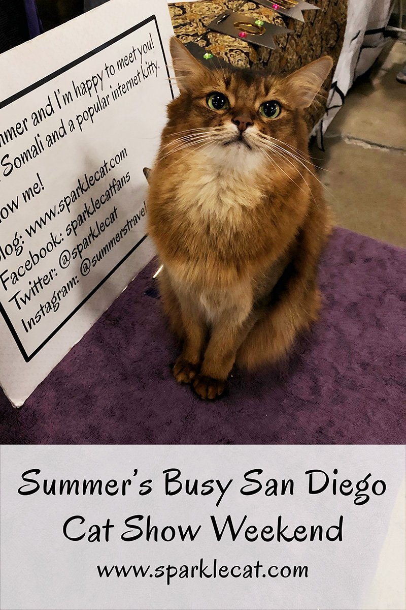 Summer has a busy but fun time at the San Diego Cat Show.