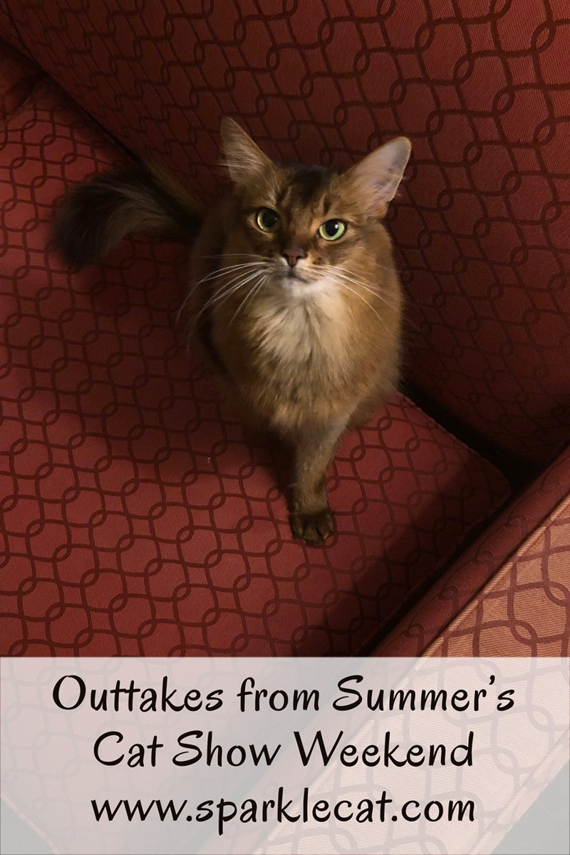 Summer shares some outtakes from her cat show weekend.