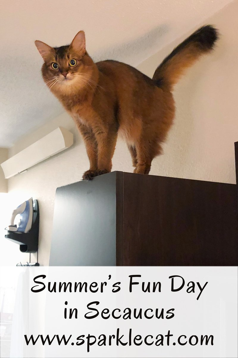 Summer has a fun day in her Secaucus hotel room.
