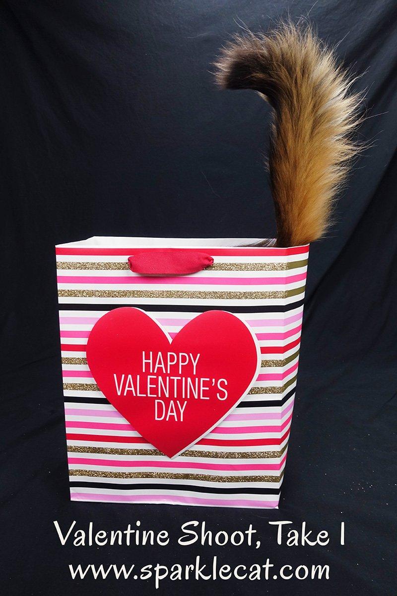 Valentine's Photo Shoot, Take One