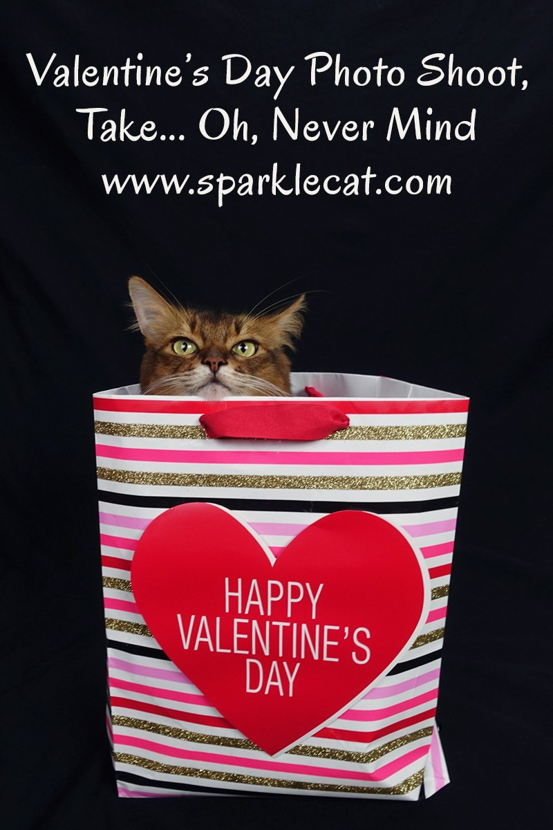 Valentine\'s Day Photo Shoot, Take... Oh, Never Mind