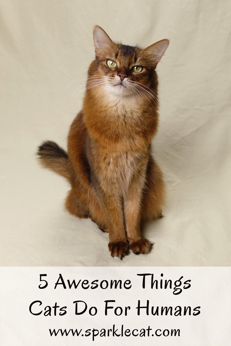 Cats are actually very giving creatures, and Summer lists 5 awesome things cats do for humans.
