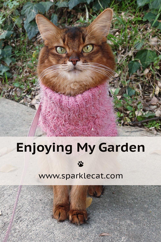 Enjoying My Garden