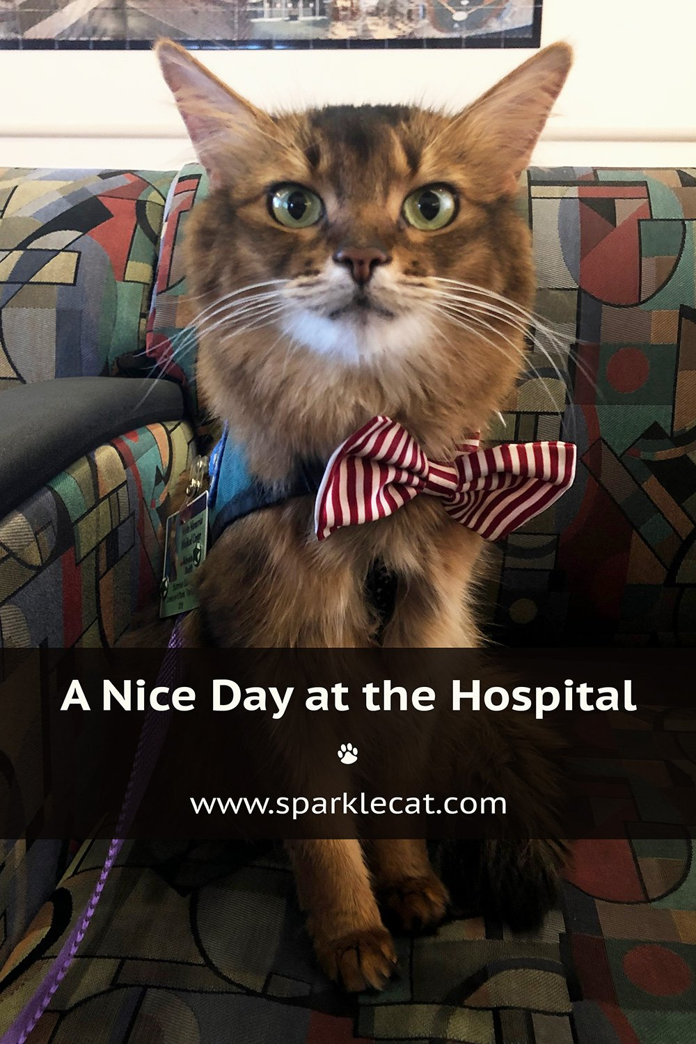 A Very Nice Day Visiting the Hospital
