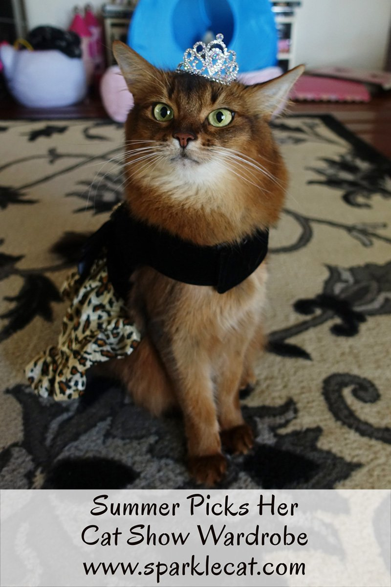 Summer picks out her wardrobe for her next cat show.