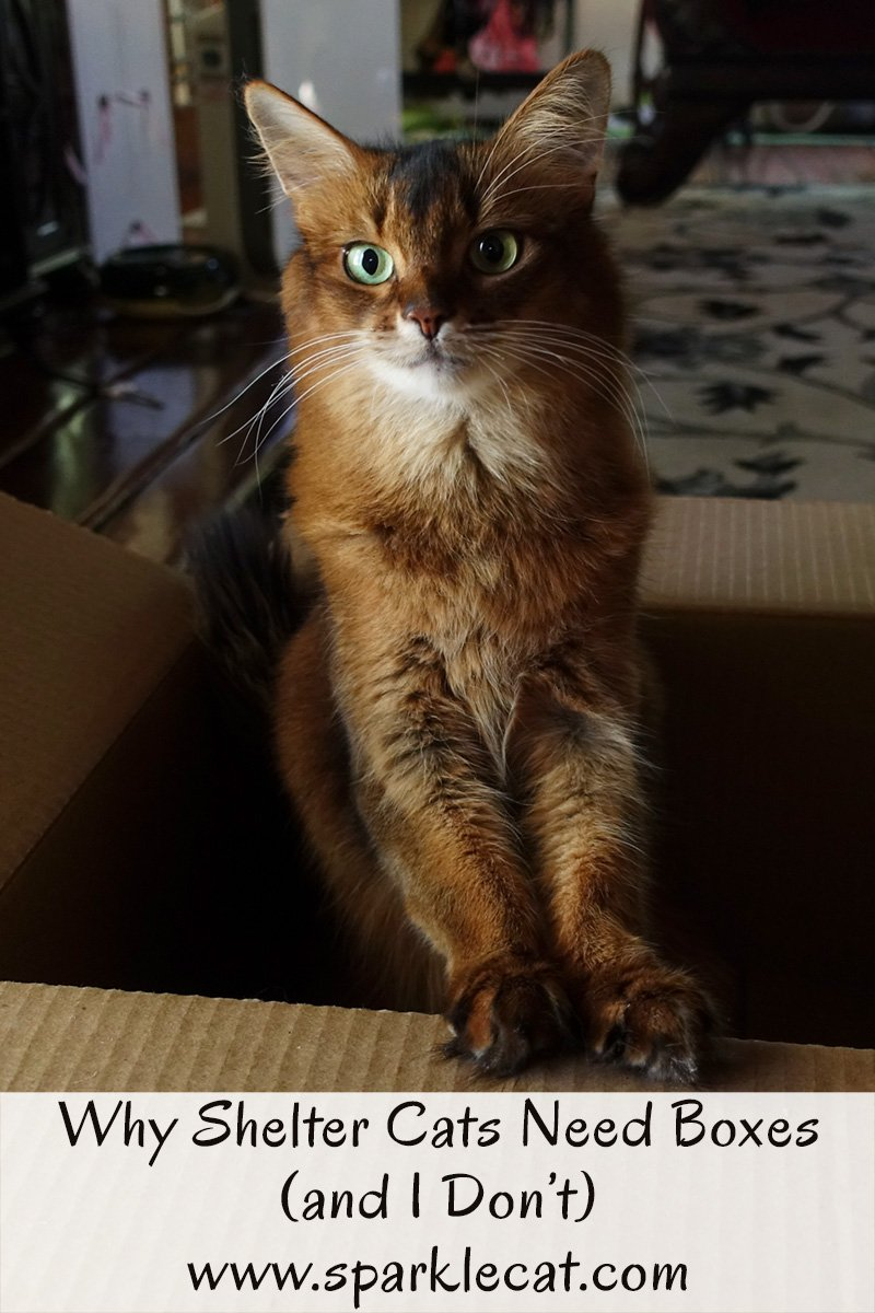 Summer finds an interesting study that explains why shelter cats need boxes - and explains why she doesn\'t.