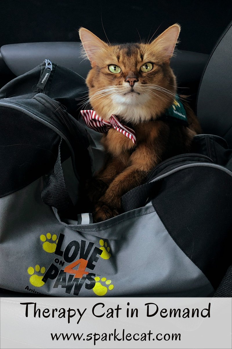 After a slow start to her therapy cat visit, Summer finds that she is very much in demand!