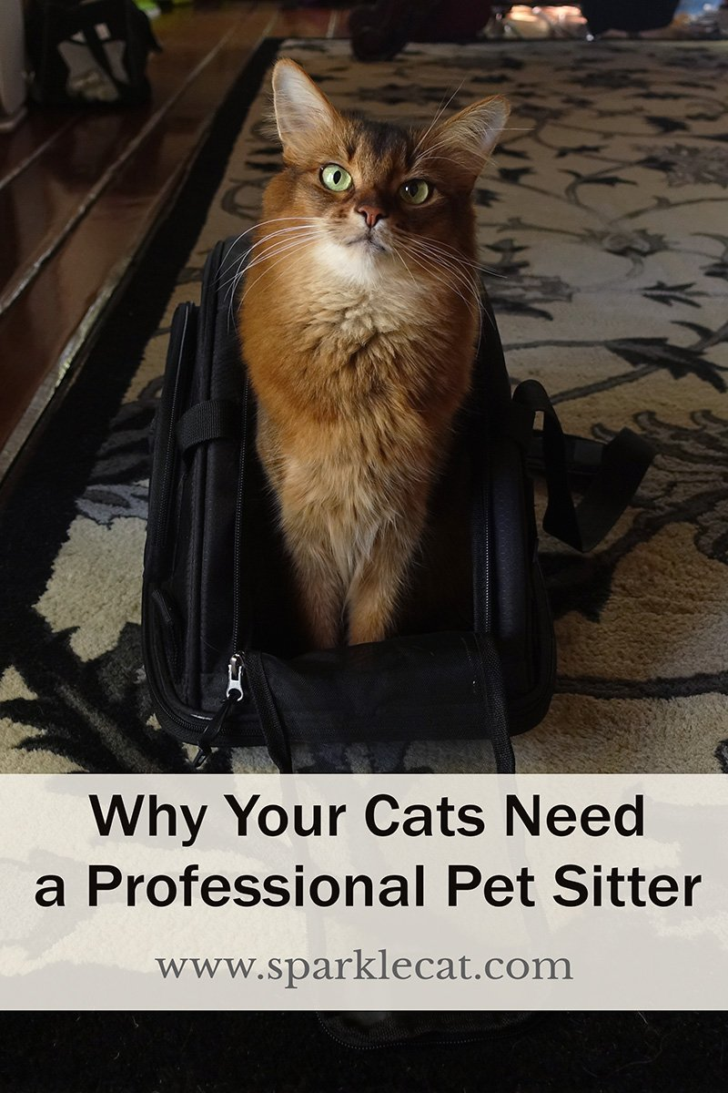 Why You Need a Professional Pet Sitter for Your Kitties