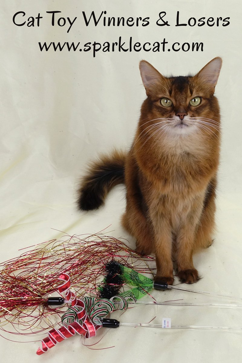 Summer judges the cat toy winners and losers from a recent photo session.