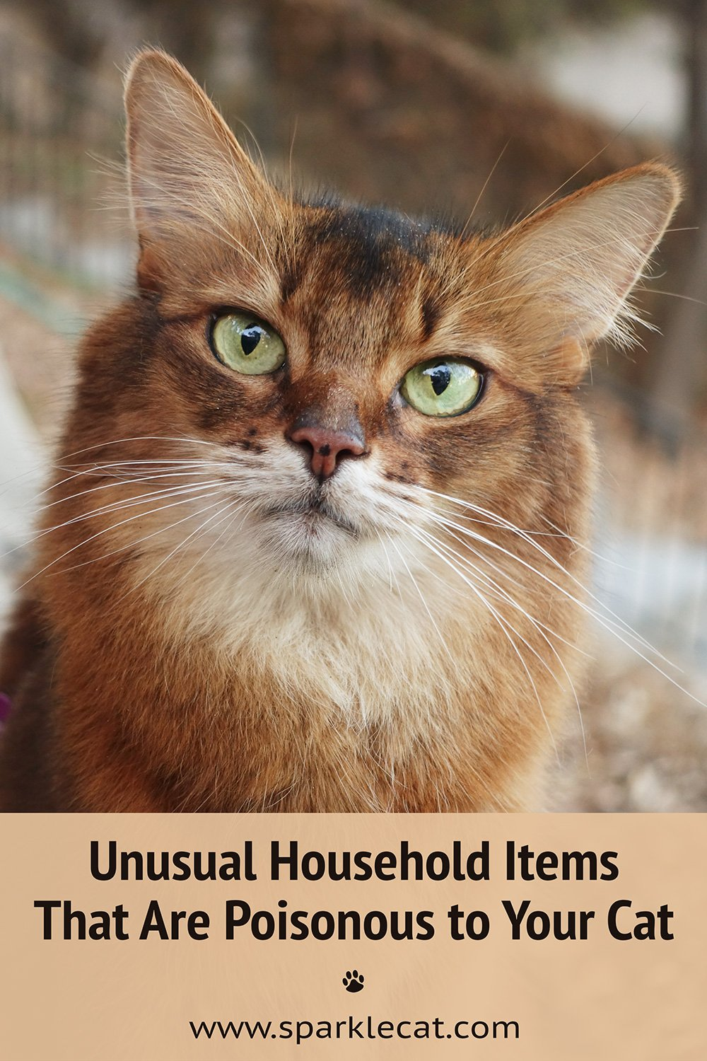 Unusual Household Items that are Poisonous to Your Cat