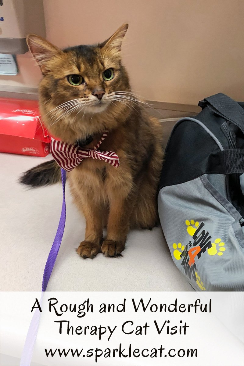 Summer\'s latest therapy cat visit was both rough and wonderful.
