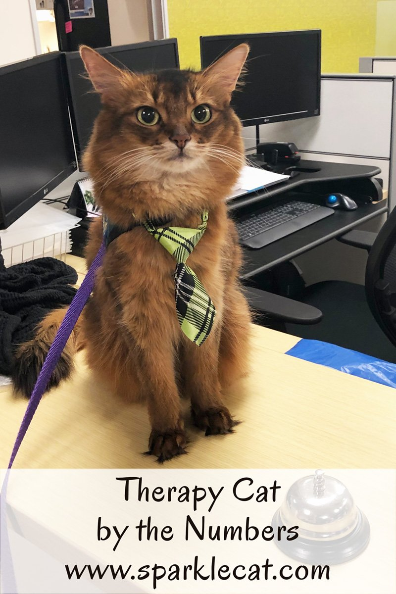 Summer makes a therapy cat stress relief visit to an accounting office.
