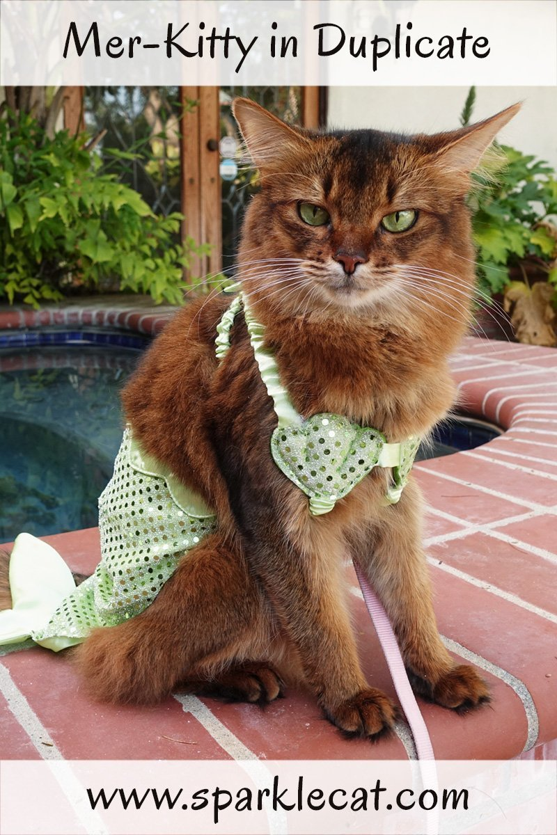Summer's mer-kitty costume was a hand-me-down - Sparkle wore it first.