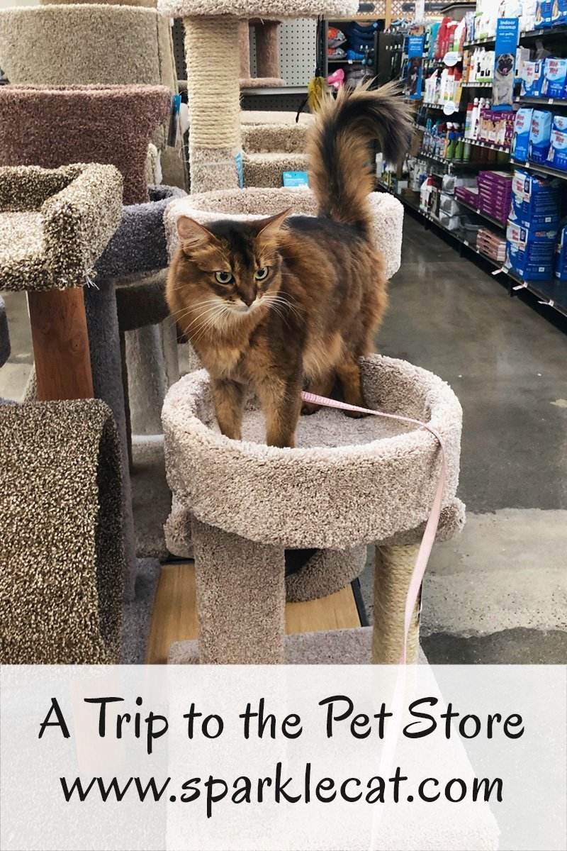Summer and her human take a quick trip to the pet store.
