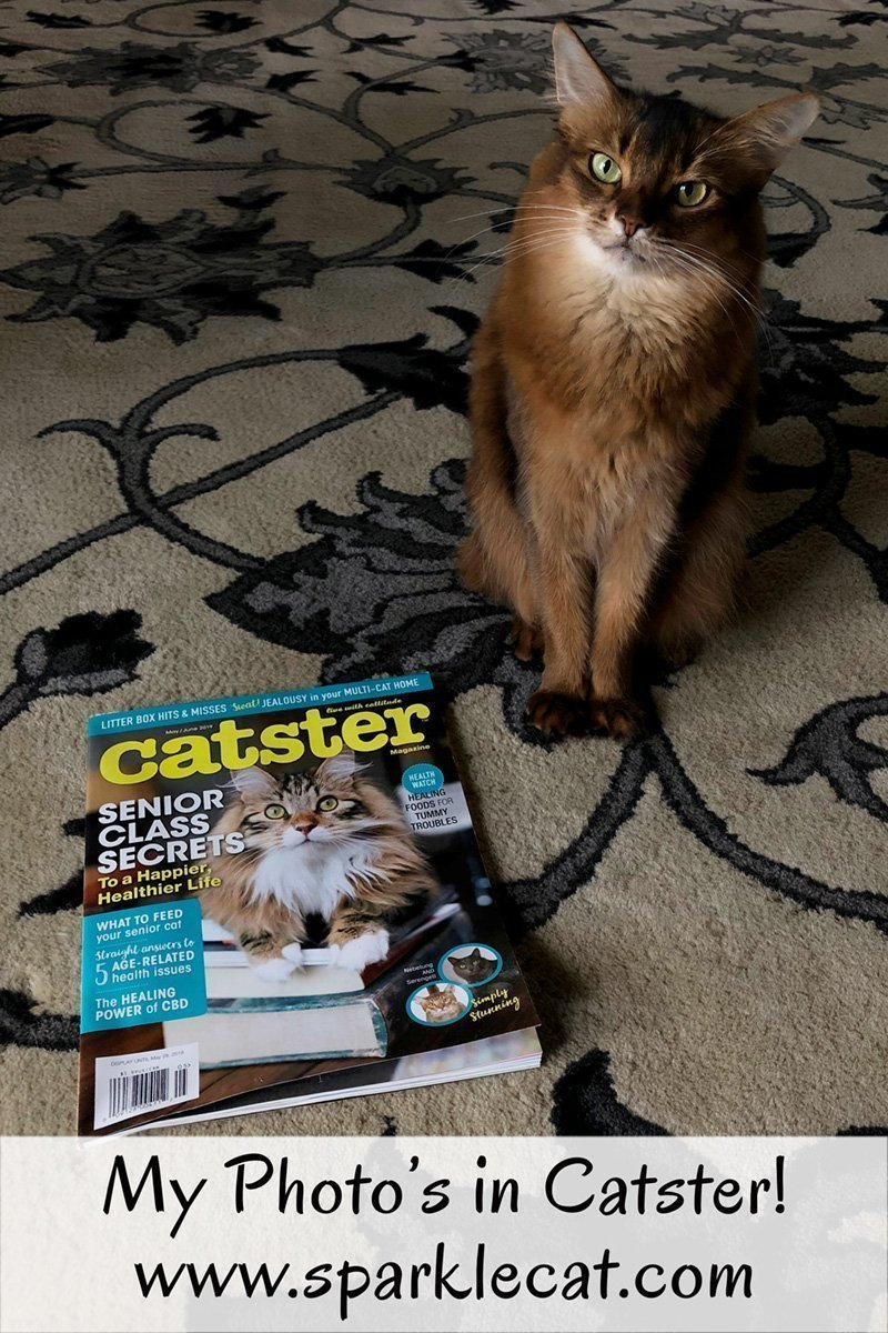 Summer's photo is in Catster magazine, and she shows it off.